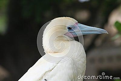 Pássaro branco