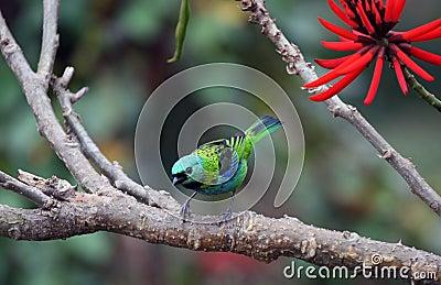 Pássaro e flor vermelha