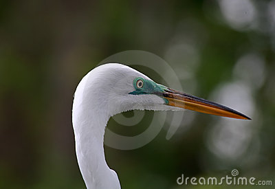 Pássaro tropical em um parque em Florida