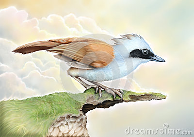 Pássaros azuis