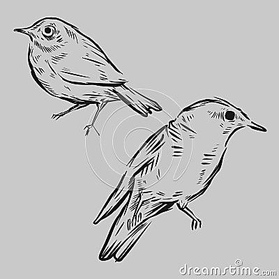 Pássaros desenhados mão