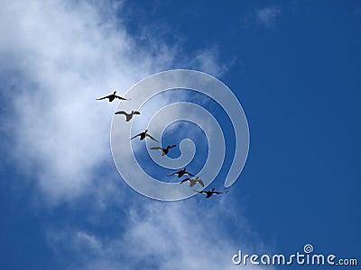 Ptak formacja