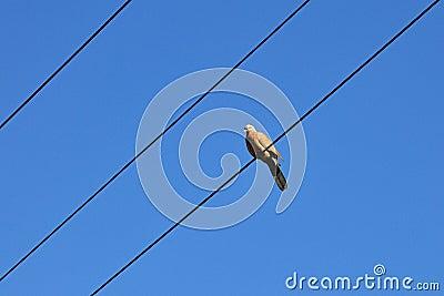 Ptak i niebieskie niebo