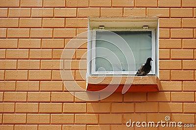 Ptak Na Wypuscie