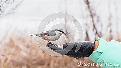 Ptaki żywiące się ręką zbiory wideo