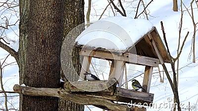 Ptaki jedzą nasiona i jagody z karmy, śniegu, przetrwania w zimie, karmienia ptaków zbiory wideo