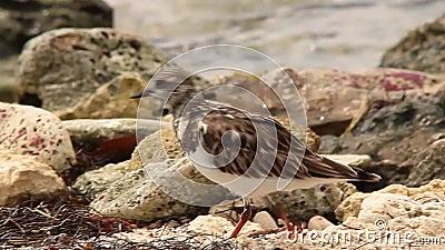 Ptaki na plaży zbiory