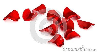 Pétalos color de rosa rojos