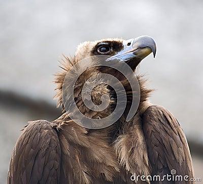 Ptasi zdobycz