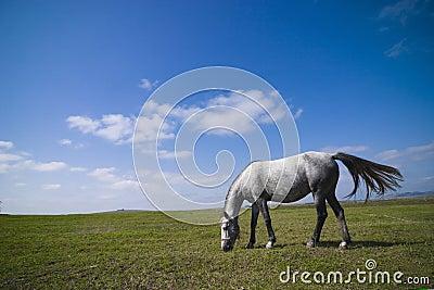 Pâturage de cheval