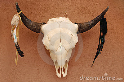 Pueblo Bull Skull