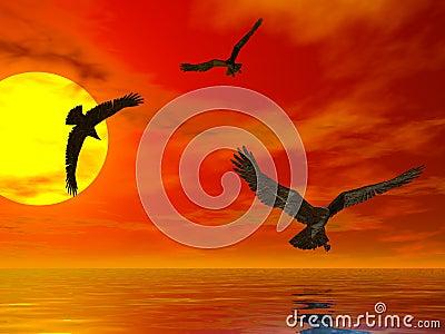 Puesta del sol Eagles