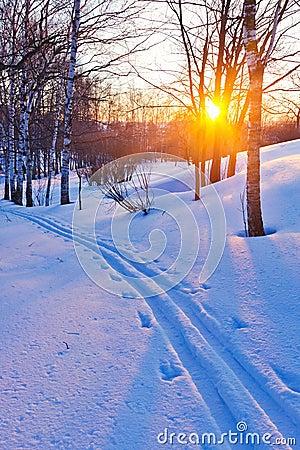 Puesta del sol en bosque del invierno