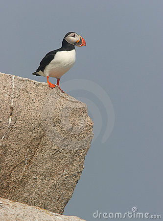 Free Puffin On Cliff Stock Image - 1129311