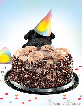 Free Pug Birthday Cake Royalty Free Stock Image - 13336356