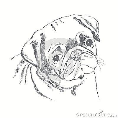 Pug Dog Face Hand drawn Illustration Sketch Stock