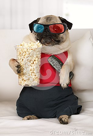 Free Pug Dog Watch TV Lounging On The Sofa Royalty Free Stock Photos - 113626328