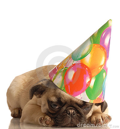 pug puppies wallpaper. funny birthday hat funny birthday hat pink girl dresses