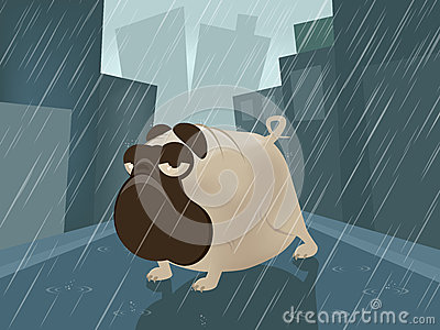 Pug on a rainy day