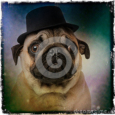 Pug wearing a top hat