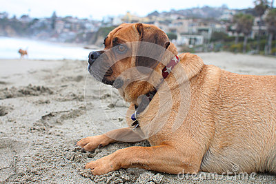 Puggle beach