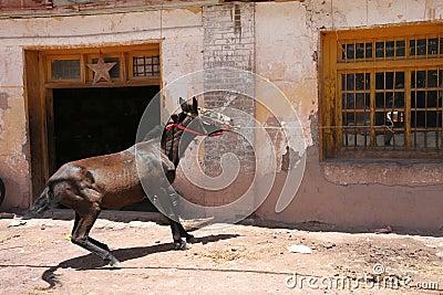 Pulling horse