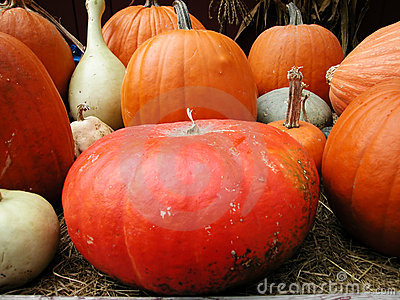Pumkin display
