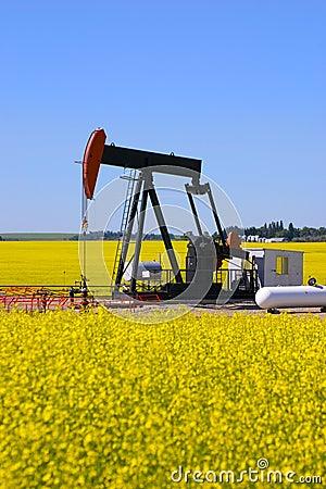 Pump jack in canola field