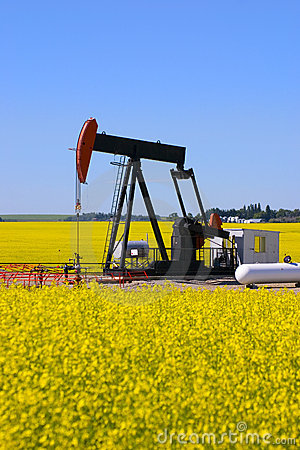 Free Pump Jack In Canola Field Stock Photo - 1016570