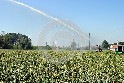 Pump jet watering a cultivated field