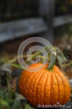 Free Pumpkin Royalty Free Stock Photography - 1352597