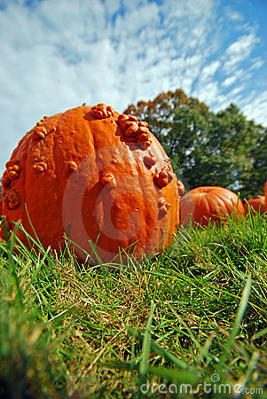 Pumpkin Against Sky Stock Images - Image: 12899384