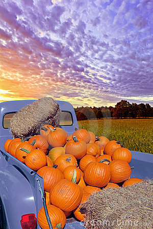 Pumpkin Days Stock Photos - Image: 17114433