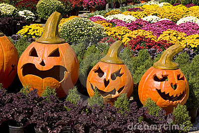 Pumpkin faces in a bed of fall flowers