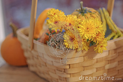 Pumpkin gourds and mums in basket selective DOF