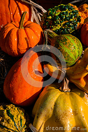 Pumpkin Gourds and other fall vegetables.