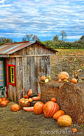 Free Pumpkin Harvest Season On The Farm Royalty Free Stock Images - 16477169