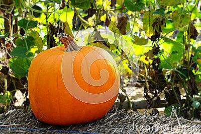 Pumpkin on a hay bale