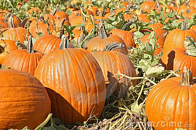 Pumpkin Patch_1