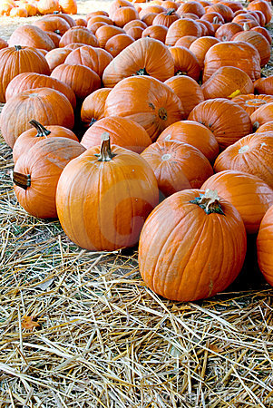 Free Pumpkin Patch Royalty Free Stock Photography - 10852847