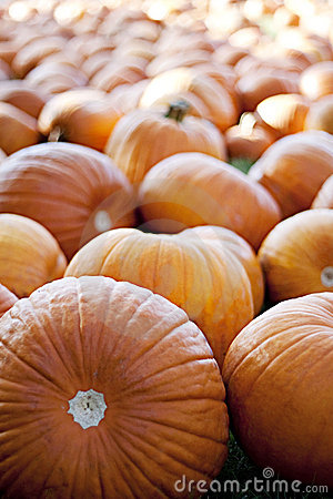 Pumpkin Patch Stock Photo - Image: 11446050
