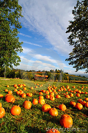 Free Pumpkin Patch Stock Images - 11459384