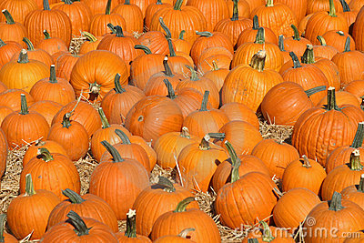 Pumpkin Patch_2