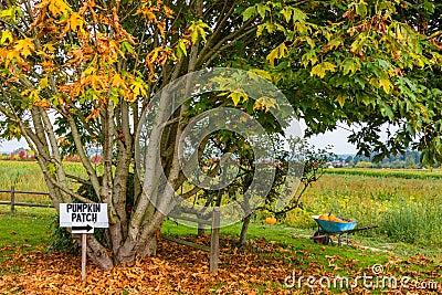 Pumpkin Patch and Wheelbarrow