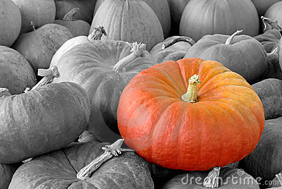Pumpkin standing out of the crowd