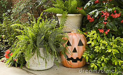 Pumpkin Surrounded by Green Plants