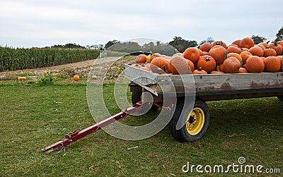 Pumpkin Tow