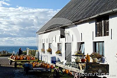 Pumpkin trailers Editorial Photo