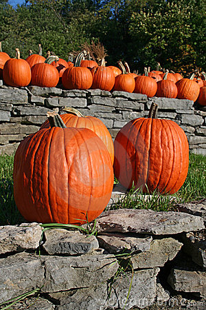 Pumpkin trio on a wall with friends