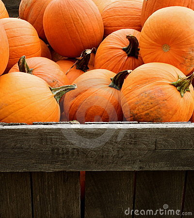 Free Pumpkins Stock Photography - 11121002